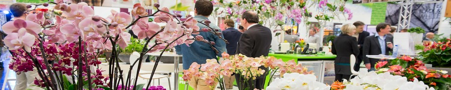 Ipm Essen - Foreground Orchids